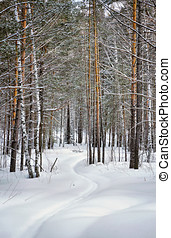 Beautiful winter landscape with snowy lane in pine forest