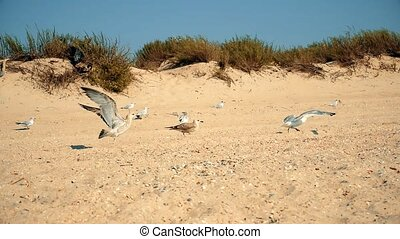 Many sea gulls take wing from sandy beach flying up into the...
