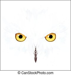 Snowy owl eyes and face on white background