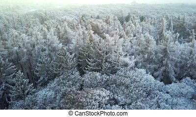 Snowy winter forest with a bird's eye view - Frost snowy...