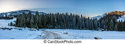 panorama of snowy road through spruce forest in mountains -...