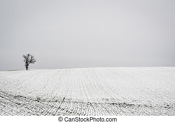 Tree and snow covered farm field, near Spring Grove,...