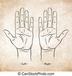 Palmistry or Chiromancy Chart Blank Template. Vector...