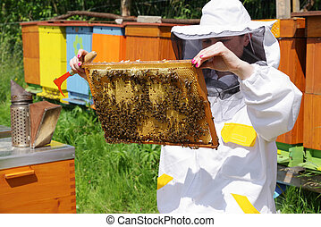 Beekeeper - Apiary - beekeeper in white worksuite wtih a lot...