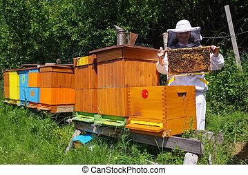 Apiary - beekeeper wtih bees - Apiary - beekeeper in white...