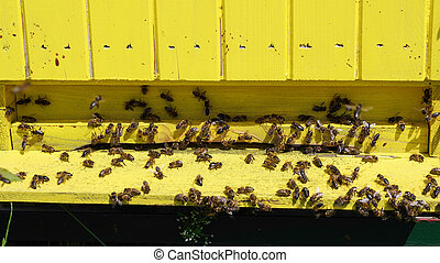 Bees in beehive - A lot of bees in beehive