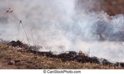 Close-up video of fire in a field view