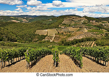 Vineyards and olive tree plantations over hills at Chianti,...