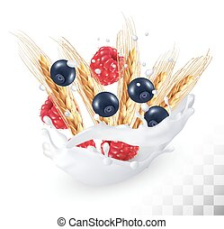 Raspberries and blueberry and wheat ear in a milk splash on a transparent background. Vector.