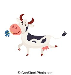 Spotted cow walking with eyes closed and daisy in mouth -...