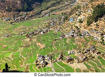 Dogadi village with terraced rice or paddy field