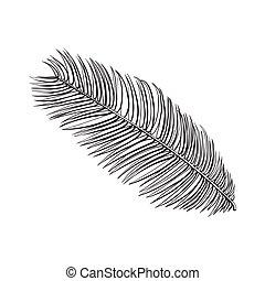 Full fresh leaf of sago palm tree, sketch vector...