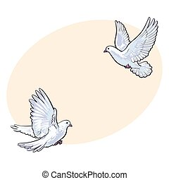 Two free flying white doves, isolated sketch style...