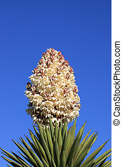 Yucca Flower - A photo of a Yucca flower set against a blue...