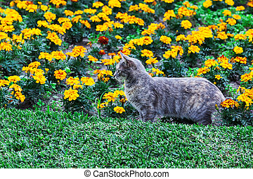 beautiful cat and flower bed