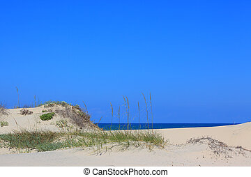 Beach Setting - A stock photo of some sea oat grass...
