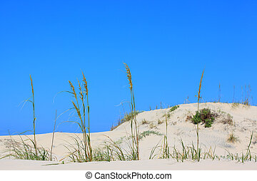 Sea Oats - A stock photo of some sea oats on the beach set...