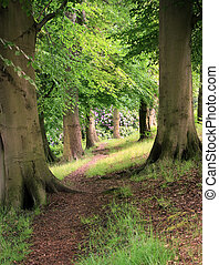 two large trees in sloping forest - bright vibrant forest...