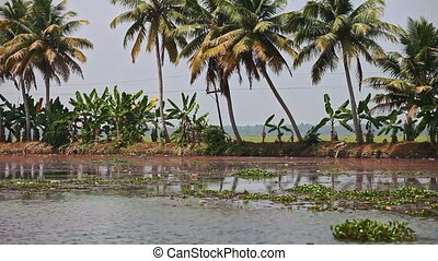 Motion along River by Large Palms on Bank in Tropics -...