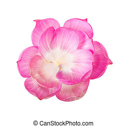 Group of lotus petal isolated.