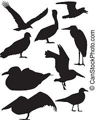 Bird Silhouettes - A vector illustration of some birds set...