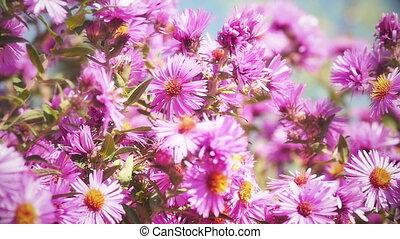 flowers in garden slow motion