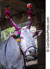 Holy cow with horns painted red in Hampi, India. Cow...