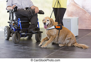 Guide and assistance dog - An assistance dog is trained to...