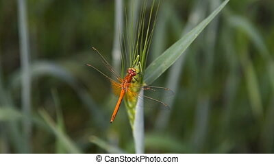 Dragonfly on the plant