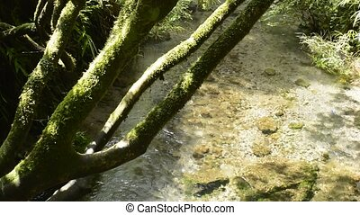 High transparency brook flowing under mossy tree