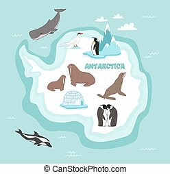 Antarctic continent map with wildlife animals vector...