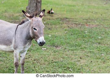 Donkey Portrait low contrast.