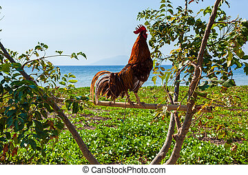 Roosters Perching On Branch - Confident rooster perching on...