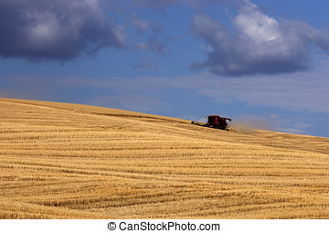 Harvesting on the Palouse