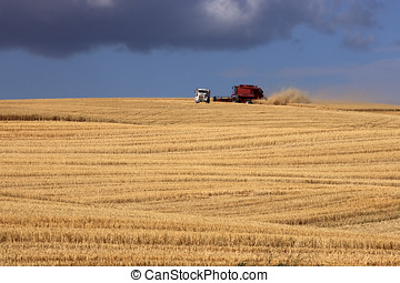 Combine with a truck in field.