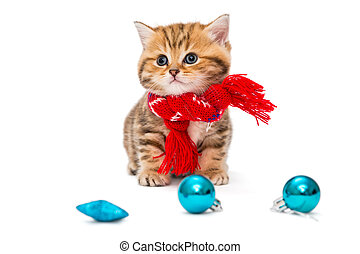 Kitten breeds British Marble in a red scarf - Cute kitten...