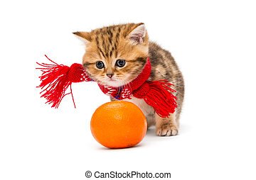 Kitten in a red scarf and a tangerine - Little kitten...