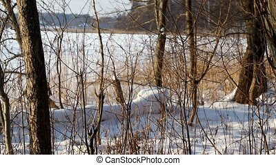 Frozen Lake 8 - Camera is focused on closer objects and...