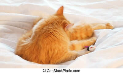 Cute ginger cat lies in bed and licking. Fluffy pet taking a...