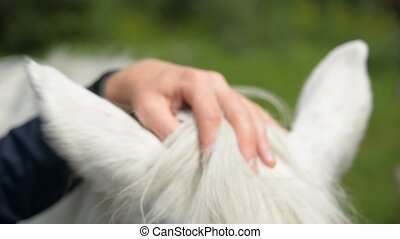 Male touch horse ear, hair and body. - male and brown horse...