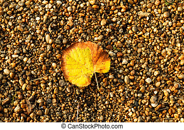 Leaf on pebbles - Photo of a yellow leaf on pebbles at...