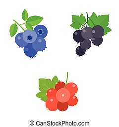 Berry vector set, blueberry, blackcurrant, red berry, flat...