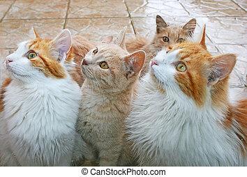 atrás, gatos, ventana