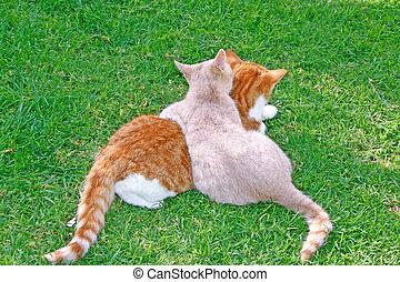hagging, gatos