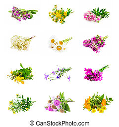 Natural medicinal plants collage isolated - Natural...
