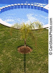 round blue swimming pool palm tree garden - round blue...