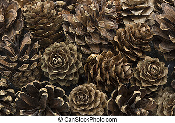 Dried pine cones closeup, format filling