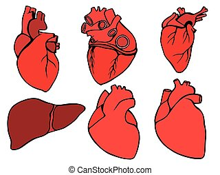 Human heart icon, cartoon style - Human hearts icon and...