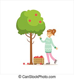 Girl Picking Up RIpe Red Apples From The Tree Helping In Eco-Friendly Gardening Outdoors Part Of Kids And Nature Series