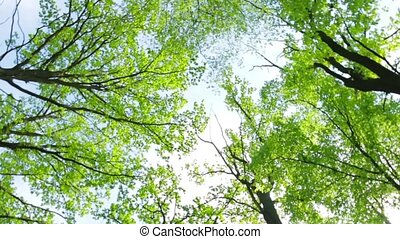 Green trees on sky background.